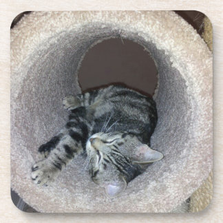 Sleepy Kitty Cat by Shirley Taylor Drink Coasters