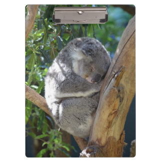 Sleepy Koala Clipboard
