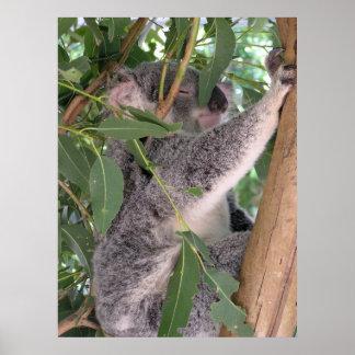 Sleepy Koala Posters