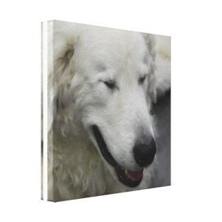 Sleepy Kuvasz Dog Canvas Print