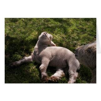 Sleepy Lamb Card