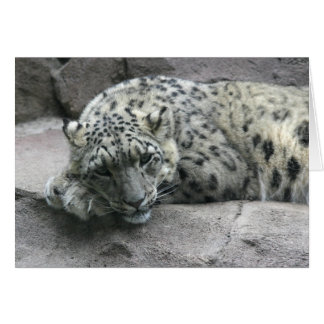 Sleepy Leopard Card