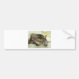 Sleepy Nap Time Kitten Bumper Sticker