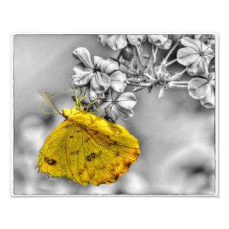 Sleepy Orange Butterfly Pop Photo Art