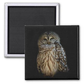 Sleepy Owl Magnet