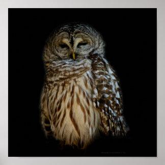 Sleepy Owl Print