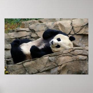 sleepy panda poster