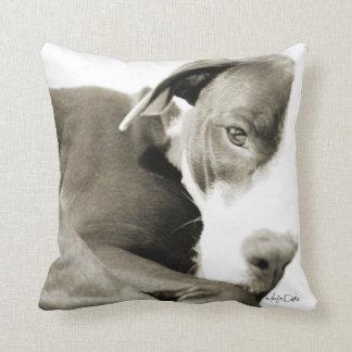 sleepy pit bull sepia photograph pillow