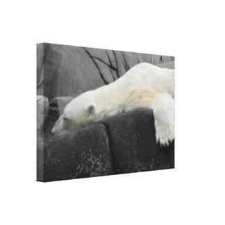 Sleepy Polar Bear Stretched Canvas Print