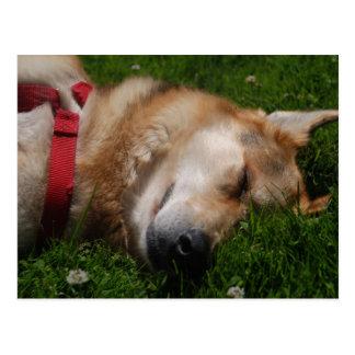 Sleepy Puppy Beauty Postcard
