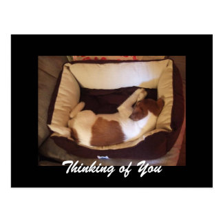 Sleepy Puppy - Thinking of You Postcard