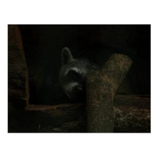 Sleepy Raccoon Postcard