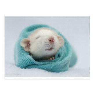 Sleepy Rat Postcard