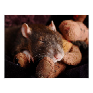 Sleepy Rat Poster