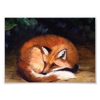 Sleepy Red Fox Photo Print