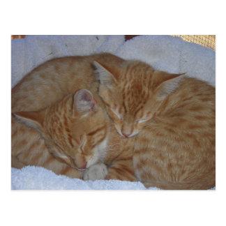 Sleepy red kittens together postcard