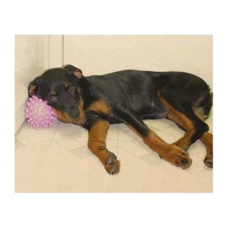 Sleepy Rottweiler Puppy and Ball Wood Canvas
