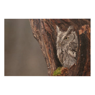 Sleepy Screech Owl Wood Canvas