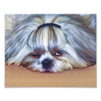 Sleepy Shih Tzu Dog Photo Art