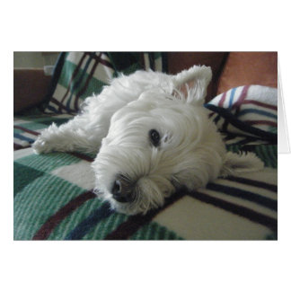 Sleepy Sofa Westie Photo Greeting Card