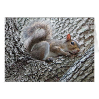 Sleepy Squirrel Greeting Card