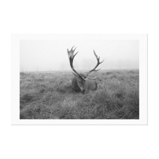 sleepy stag stretched canvas prints