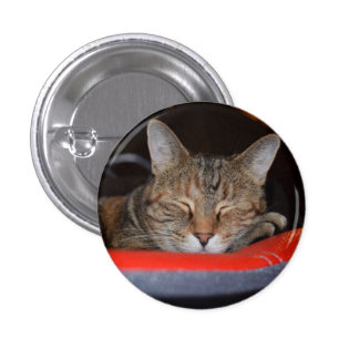 Sleepy Tabby Pinback Buttons