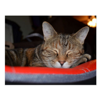 Sleepy Tabby Post Card