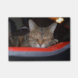 Sleepy Tabby Post-it® Notes