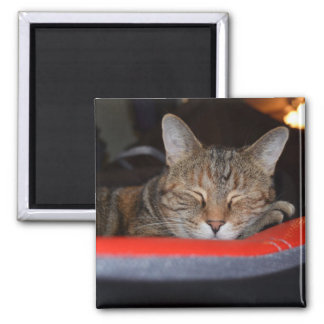 Sleepy Tabby Refrigerator Magnets