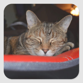 Sleepy Tabby Square Sticker