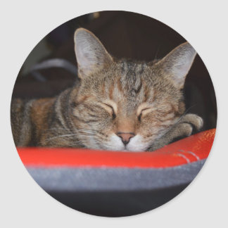 Sleepy Tabby Sticker