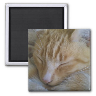Sleepy Time Kitty Square Magnet