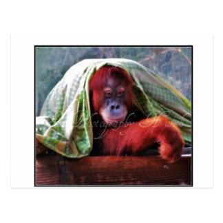 Sleepy time Monkey Postcard