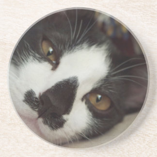Sleepy Tuxedo Cat Drink Coasters