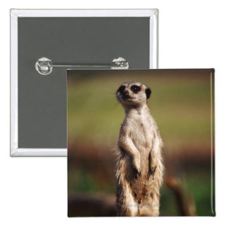 slender-tailed meerkat 2 inch square button
