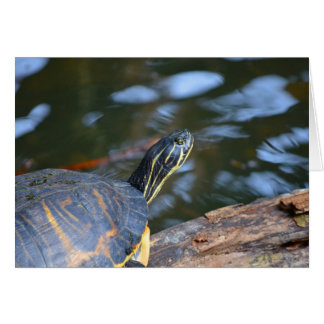 slider water turtle head out of shell card