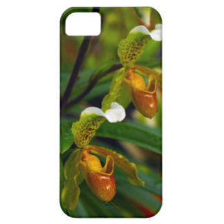 Slipper Orchid iPhone 5 Covers