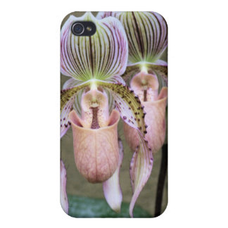 Slipper Orchids iPhone 4/4S Cases