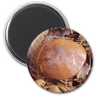 Slippery Jack Mushroom Magnet