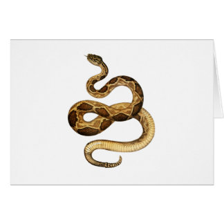 Slithering Expressions Card