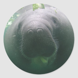 Sloppy Manatee round stickers