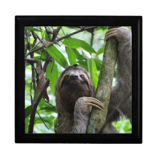 Sloth_20171101_by_JAMFoto Gift Box