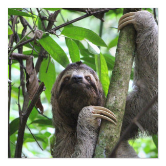 Sloth_20171101_by_JAMFoto Magnetic Card