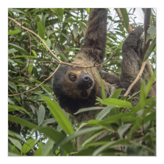 Sloth_20171103_by_JAMFoto Magnetic Card