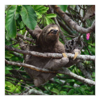 Sloth_20171106_by_JAMFoto Magnetic Card