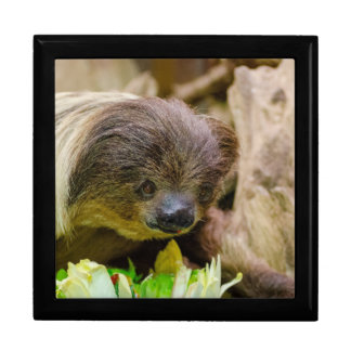 Sloth_20171107_by_JAMFoto Gift Box