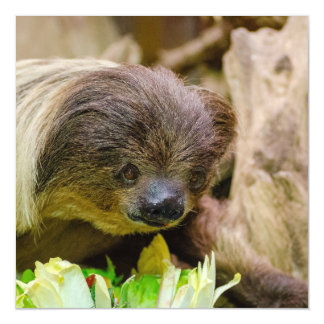 Sloth_20171107_by_JAMFoto Magnetic Card