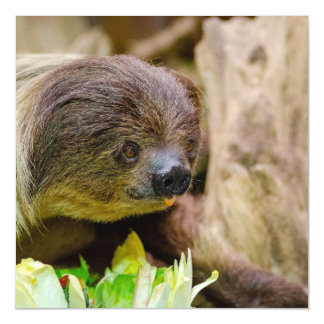 Sloth_20171108_by_JAMFoto Magnetic Card