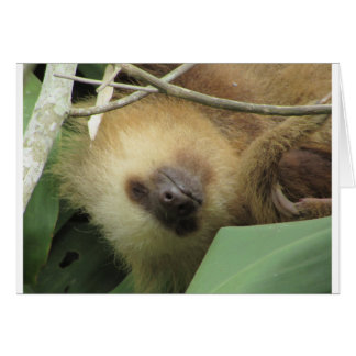 Sloth note card
